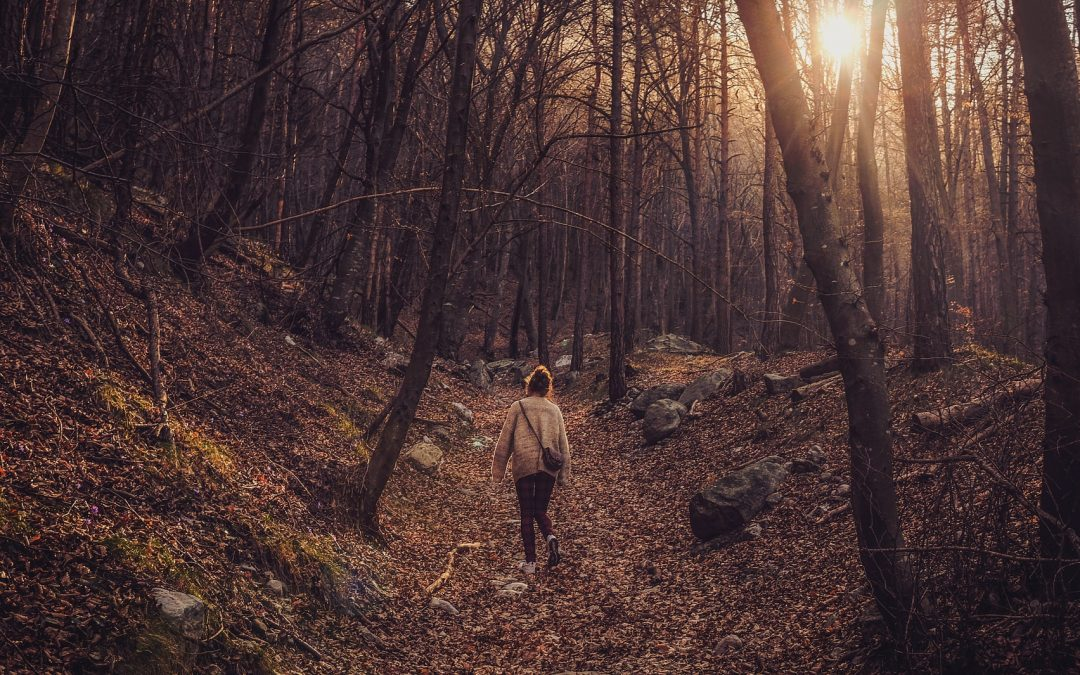 Growth in the Spirit: Walking in the Woods