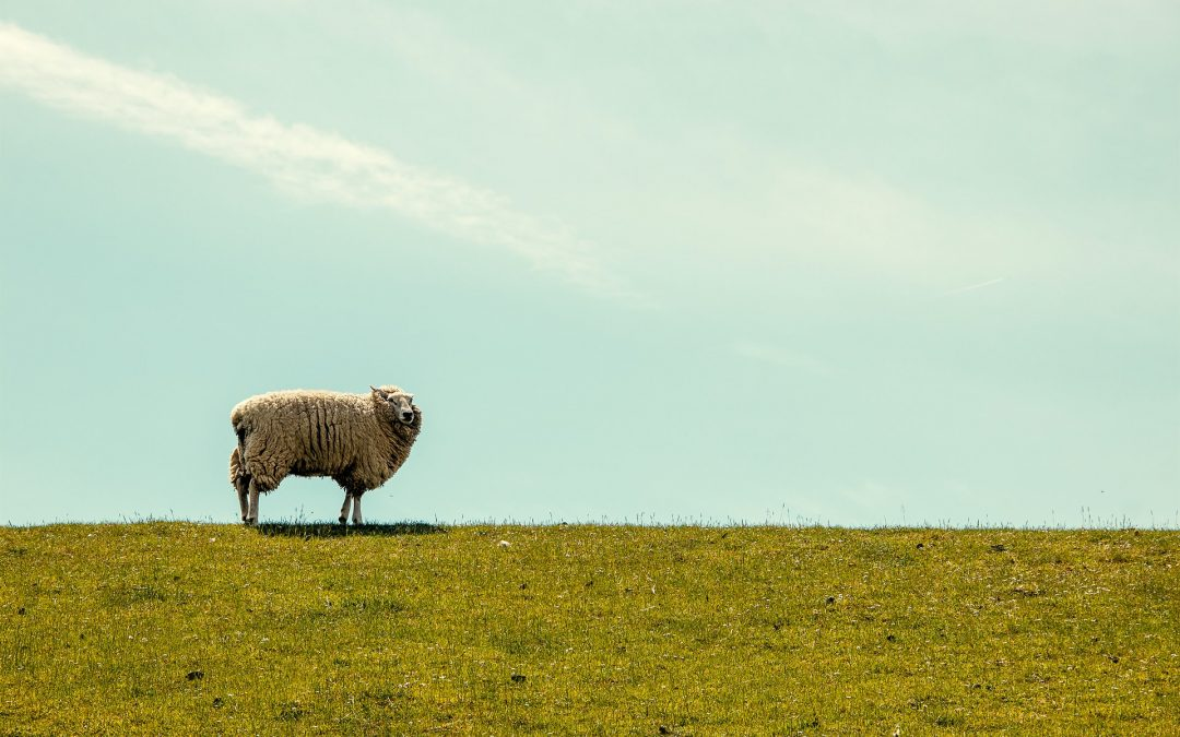My Ignatian Moment: Bring Me Home to the Lost Sheep